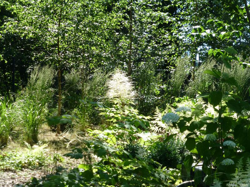 Geißbart und Calamagrostis